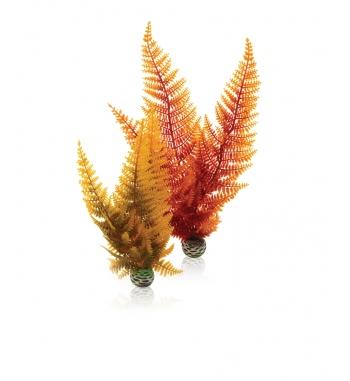 OASE BIORB 2 piante autunno
